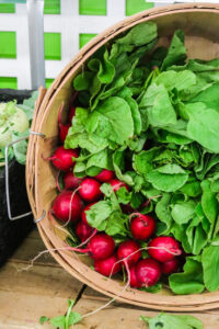 bright red radishes at a farmstand